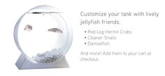 Jellyfish Tanks and live pet Jellyfish for sale at Jellyfish Art Jellyfish For Sale, Jellyfish Tank, Tanks, Tech, Gift Ideas, Live, Gifts, Stuff To Buy, Shopping
