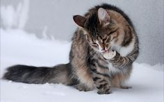 Cat loves snow