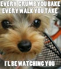 Every walk you take, I will be watching you..