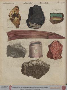 From 'Bertuch's Bilderbuch für Kinder.'  Weimar, 1801.