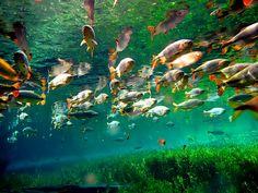 pantanal | Guia Quatro Rodas publica roteiro de viagem para Bonito(MS) e…