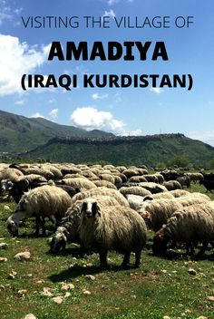 Amadiya is a 5,000 year old village located 230km from Erbil, in Iraqi Kurdistan, Iraq. History, stunning landscape and the locals you meet on the way make Amadiya an awesome trip.