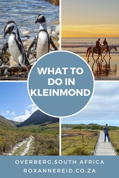 21 things to do in Kleinmond in the Cape Overberg - Roxanne Reid African Vacation, Stuff To Do, Things To Do, Stony Point, Wildlife Safari, Beach Road, Slow Travel, Kruger National Park, Nature Reserve