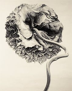 Liu Dan (b. 1953), Poppy, Ink on paper, 2007