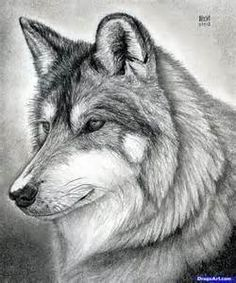 How to draw a wolf head mexican wolf step 2 how to draw wolf sketch lots of sketches here ccuart Images