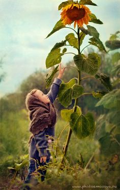 child and sunflower ~ brings back memories of my first garden!  My dad had me plant radishes (so we would have fast results - - we did!), and hollyhocks, which he promised would grow to be taller than me - - they did and it was amazing!