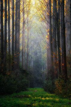 ~~Light ~ forest by István Ponty~~