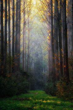 ~~Light ~ forest by István Ponty~~