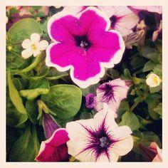 #outside #instagramers #instagram #igers #spring #flower #photography #nature #plants #flowers #photo - @foxymama923- #webstagram