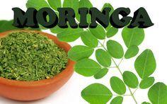 Moringa, una superplanta llena de propiedades