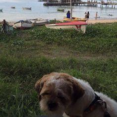 Olá princesas!!!! Eu sou mesmo um modelo!!! Até quando estou cansado! Ass: Strike hahahha #strikeocachorromaisfelizdomundo #strike #shihtzu #dog #love #beach