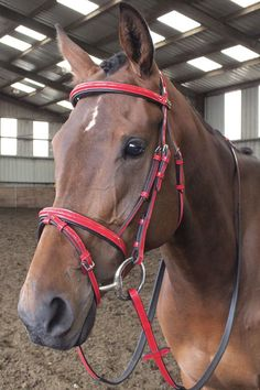 The John Whitaker patent leather bridle is a fully adjustable leather bridle. Its available in your choice of Black or Red in sizes to fit your Pony or Horse. John Whitaker, Equestrian Supplies, Horse Bridle, Saddles, Patent Leather, Pony, Horses, Riding Clothes, Animals