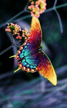 """Butterfly krafttier """"Blue butterfly on white roses"""" by Garry Gay butterfly cartoon Cartoon Butterfly, Butterfly Drawing, Butterfly Photos, Butterfly Wallpaper, Star Butterfly, Butterfly Kisses, Butterfly Flowers, Picture Of A Butterfly, Photos Of Butterflies"""