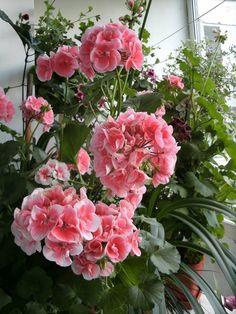 Mikor jön el a teleltetés ideje? Special Flowers, Beautiful Roses, Floral Wreath, Gardening, Wreaths, Decor, Decoration, Garten, Lawn And Garden