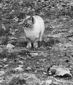 blackandwithe cat with leaf by pantor66 (@pantor66) - Profile on EyeEm
