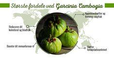 Garcinia Cambogia Pure | Effektivt og hurtigt vægttab | WeightWorld.dk