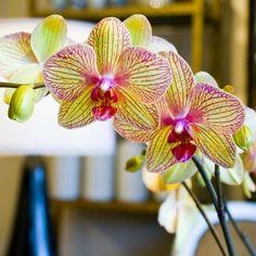 #Piante Las flores simbolizan felicidad y gestos románticos. Prueba incluir #Orquídeas en tus regalos y celebraciones. - http://piante.co/ - #Flores #Premium #Decoración #IdeasDeRegalos #Colombia