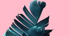 Banana Leaf, Banana Leaf Print, Botanical Print, Tropical Print, Plant Prints, Palm Tree Print, Palm Print, Printable Art, Nature Prints | Leaf prints, Plants …