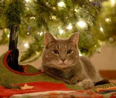 Posing for a picture under the tree