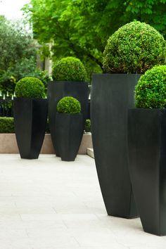 Dekoration für Terrasse und Balkon: Diese Zierbäume lassen sich im Blumenkübel ziehen