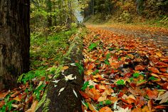 colorful autumn Colorful, Autumn, Texture, Wood, Crafts, Photography, Painting, Art, Craft Art