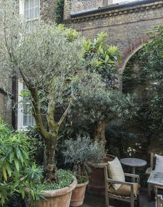 Urban Garden Design roof garden Rose Uniacke London potted olive trees by Matthew Wiliiams. - London gardeners have radically transformed they way they use their rooftops; here are 10 ideas to steal for any roof garden.