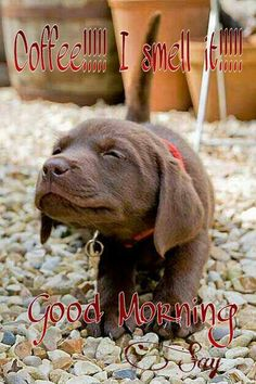 Coffee!!! I smell it!!! Good morning