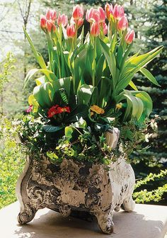 .this just says SPRING... beautiful ( and lovely aged pot doesn't hurt)