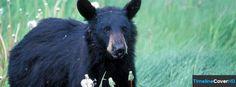 Black Bear Facebook Timeline Cover Facebook Covers - Timeline Cover HD