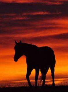 Peace Love Horses!