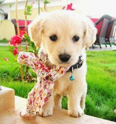 Cute Puppy and Toy