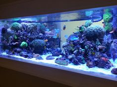 300 gallon reef. I LOVE this tank so much!