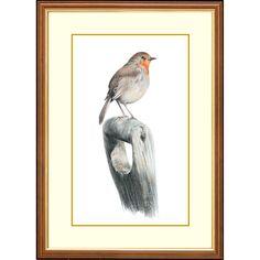 'Wintering Birds' - Robin #gifts #wildlife #painting #robin #winter Beautiful Series, British Wildlife, Detailed Drawings, Watercolor Pencils, Robin, Birds, Frame, Winter, Artist