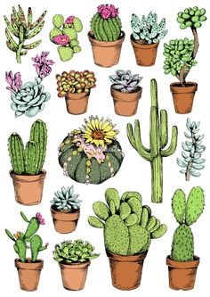 Cactus illustration by May van Millingen . - Cactus illustration by May by Millingen More Best Picture For Cactus art For Your Taste You are l - Succulents Drawing, Cactus Drawing, Cactus Painting, Cactus Art, Painting & Drawing, Watercolor Paintings, Cactus Plants, Sun Drawing, Indoor Cactus