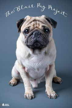 Pug nail trims. Never have there existed three more terrifying words in the English language…