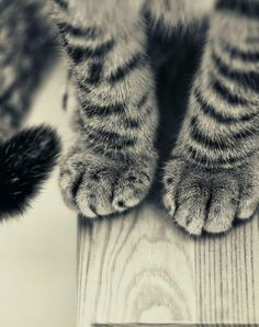 Cats leave paw prints on your heart. Cute cats 97 - Click the picture for more cute cats and pets info and pictures. #Pets