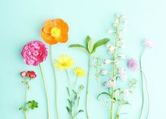 pretty colors and happy flowers Happy Flowers, Love Flowers, Art Floral, Bloom Baby, Floral Border, Flower Wallpaper, Flower Cards, Cute Wallpapers, Planting Flowers
