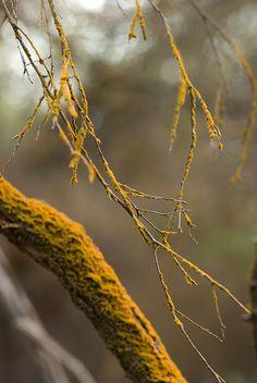 orange lichen by nervous system on Flickr. https://www.flickr.com/photos/jrosenk/3115507870/