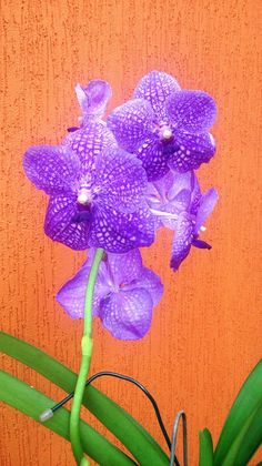 Orchidaceae, Clean House, Purple, Floral, Inside Garden, Secret Gardens, Vegetable Gardening, Gardening, Nature