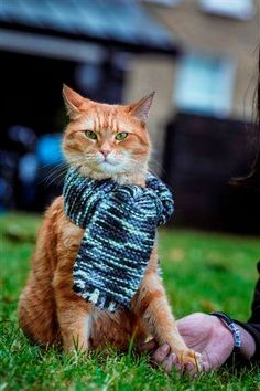.cat ♥ proudly wearing hid new scarf!.