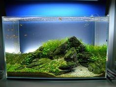 Aquascape nice rock and plant combo