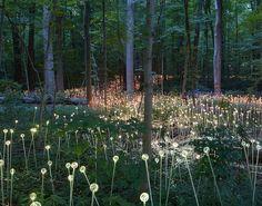 Bruce Munro's Light Installations at Longwood Gardens