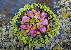 mano kellner, nature mandala Collage, Circles, Succulents, Nature, Plants, Mandalas, Peonies, Collages, Naturaleza