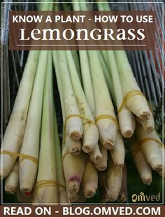 LEMONGRASS - KNOW A PLANT - Learn more on how to use this therapeutic and medical  herb. Read more..