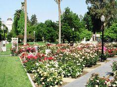 Wonderful McKinley Park And Rose Garden 3330 McKinley Blvd. Sacramento, CA 95816 (916)