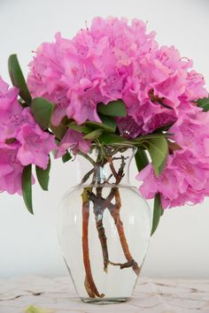 A pice of spring inside, Rododendron sp. Flower Arrangements, Glass Vase, Gardens, Decoration, Spring, Colors, Flowers, Home Decor, Decor