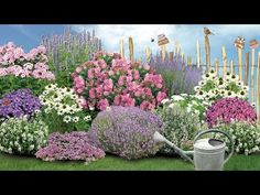 Schneewittchen Snow White fragrance collection: This noble collection seems to float in the garden l Different Plants, Types Of Plants, Rosen Beet, Flower Drawing Images, Hosta Gardens, Hydrangea Care, Rose Trees, Planting Roses, Organic Fertilizer