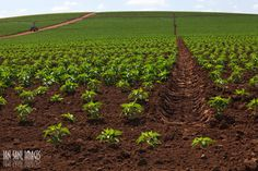 Fertilidade do Solo: Terra e Plantio