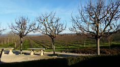Sonoma Valley in January