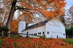 Thomas Schoeller - White Barn and Silo Autumn in New England